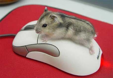 Альтернатива компьютерной мыши. Интересные гаджеты